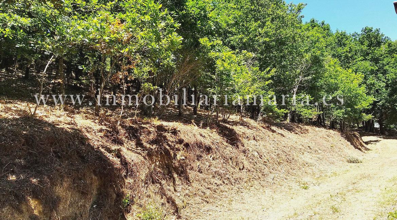 Camino-Apartamentos-rurales-Ribeira-de-Piquin